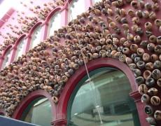 10 de junio de 2015 – Mercat de les Flors (Barcelona)